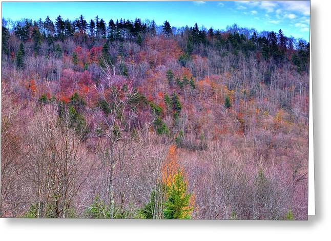 A Touch Of Autumn Greeting Card by David Patterson
