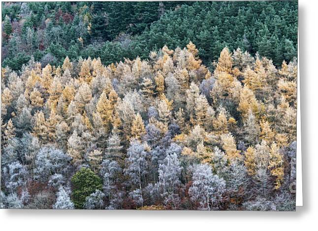 A Touch Of Frost Greeting Card by Tim Gainey