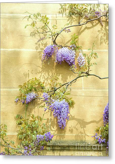 A Touch Of Lilac Greeting Card by Tim Gainey