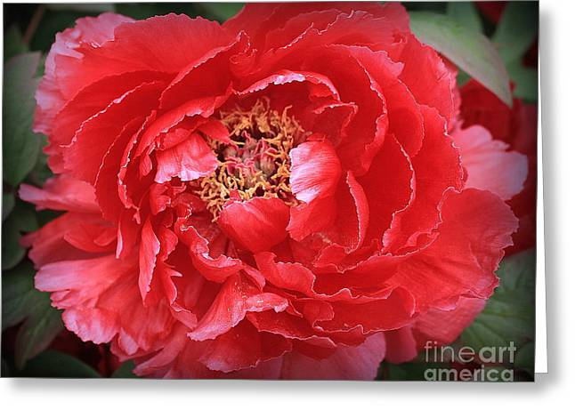 A Touch Of Pink On Red Peony Greeting Card by Dora Sofia Caputo Photographic Art and Design