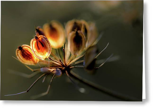 A Touch Of Sunshine On Dill Seeds Greeting Card by Mah FineArt
