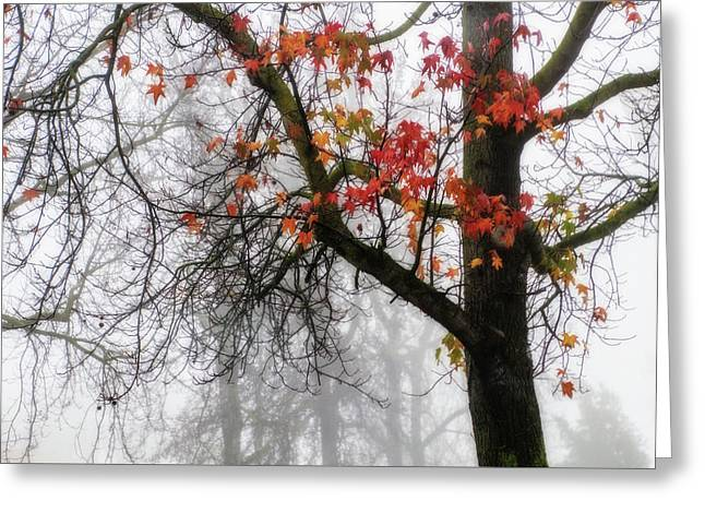 A Trace Of Autumn Greeting Card by Terry Davis