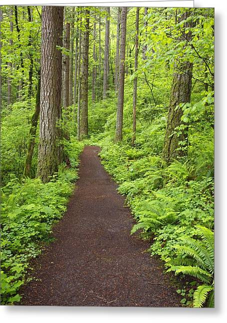 A Trail In Columbia River Gorge Greeting Card
