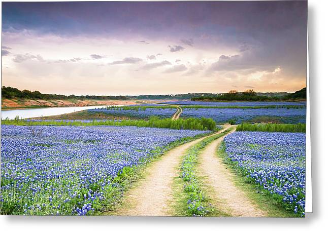 A Trail In The Middle Of Bluebonnet Field - Texas Wildflower Greeting Card