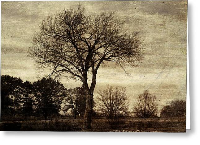 A Tree Along The Roadside Greeting Card