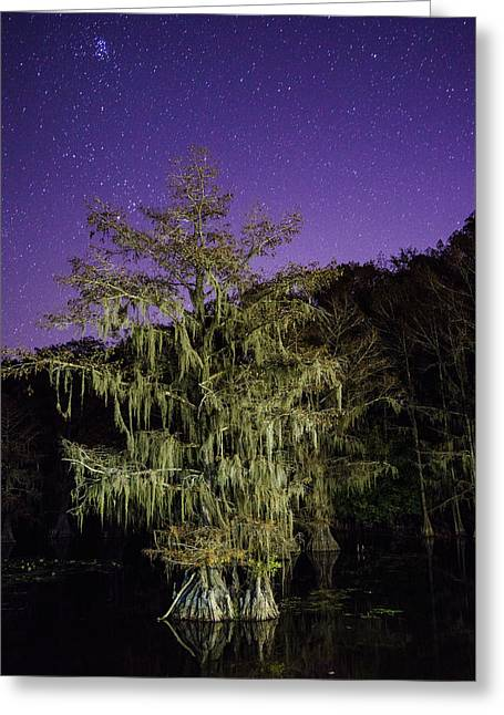 A Tree And North Eastern Starry Sky - A Portrait Of A Bald Cypress Greeting Card