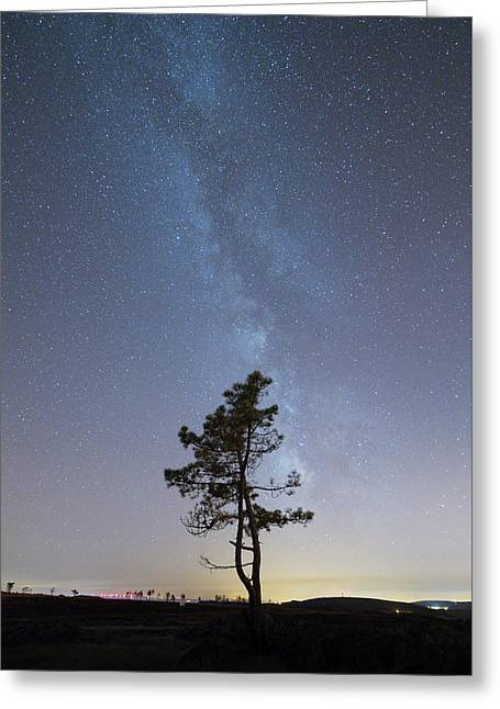 Greeting Card featuring the photograph A Tree by Bruno Rosa