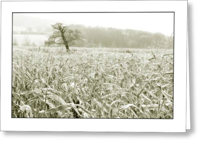 A Tree In A Cornfield Greeting Card by Mal Bray