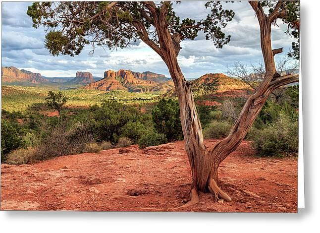 A Tree In Sedona Greeting Card by James Eddy