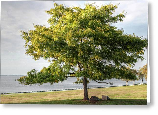 Greeting Card featuring the photograph A Tree In The Park Bristol Ri by Tom Prendergast