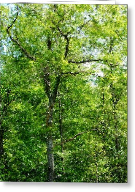 A Tree In The Woods At The Hacienda  Greeting Card by David Lane