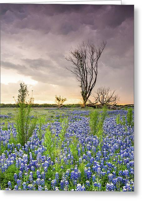 A Tree Of Wildflower Field Under Stormy Clouds - Texas Greeting Card by Ellie Teramoto