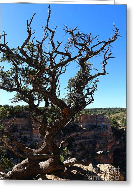 A Tree On The Edge Greeting Card by Christiane Schulze Art And Photography