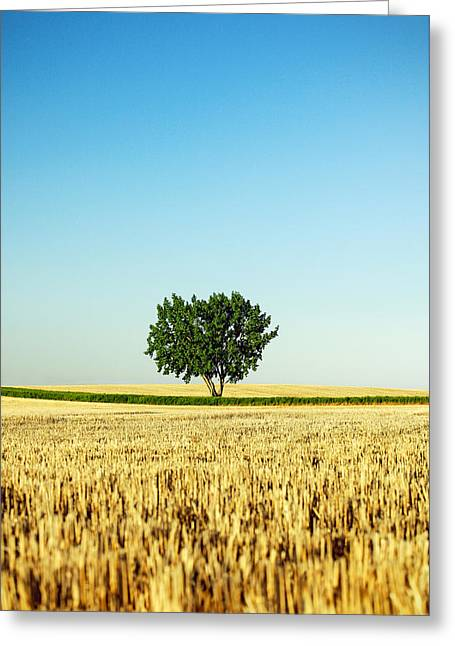 A Tree Stands Alone Greeting Card by Todd Klassy
