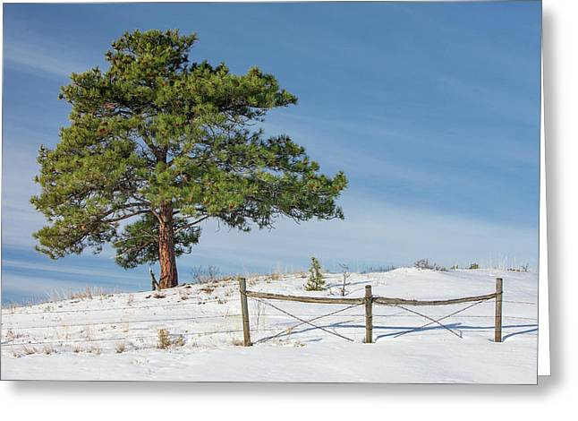 A Tree Warms Greeting Card by Todd Klassy