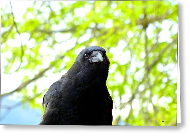 A Very Tame Crow Greeting Card