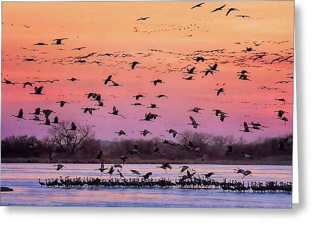 Greeting Card featuring the photograph A Vibrant Evening by Susan Rissi Tregoning