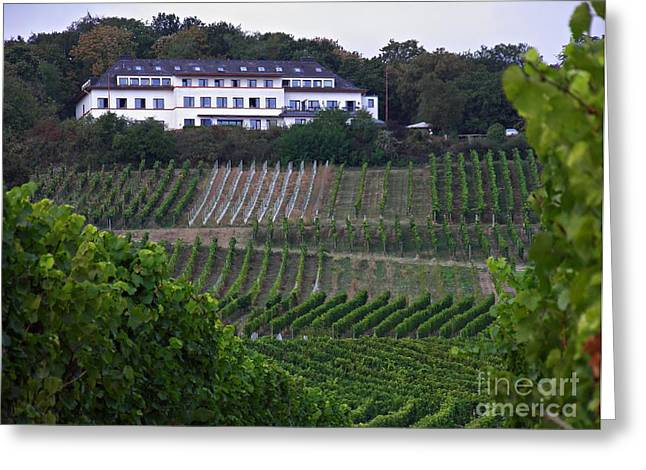 A Vineyard Above Rudesheim 2 Greeting Card by Sarah Loft