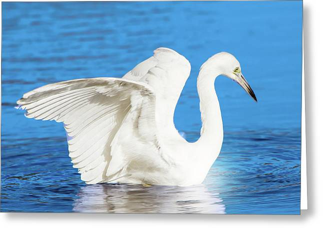 A Vision In White Greeting Card by Mark Andrew Thomas