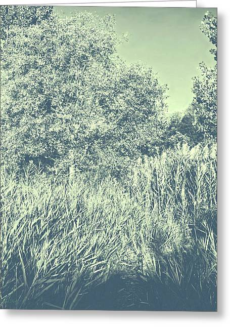A Walk Amongst The Reeds Cool Gray Greeting Card