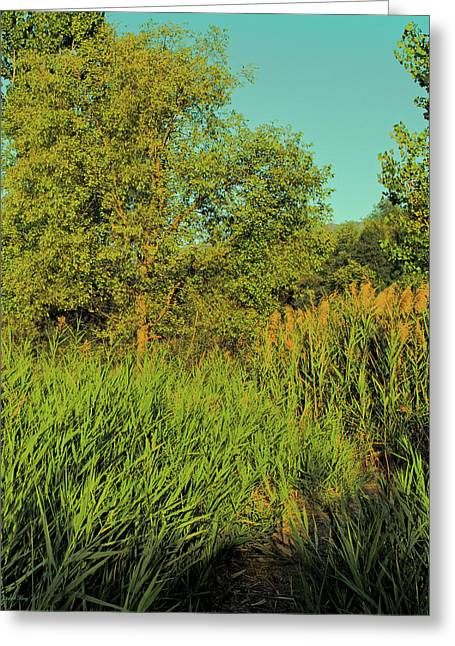 A Walk Amongst The Reeds Greeting Card