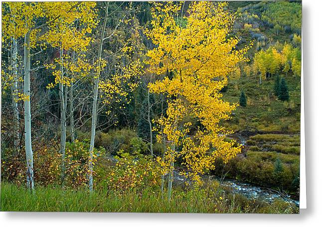 A Walk In The Aspen Forest Greeting Card by Tim Reaves