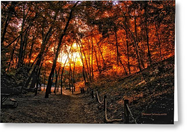 A Walk In The Autumn Woods Greeting Card