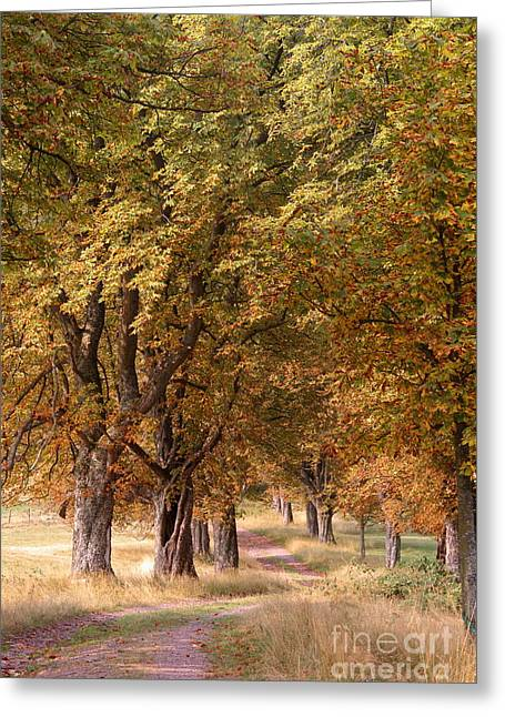 A Walk In The Countryside Greeting Card