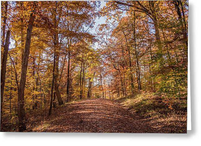 A Walk In The Woods Greeting Card by Andrea Kappler