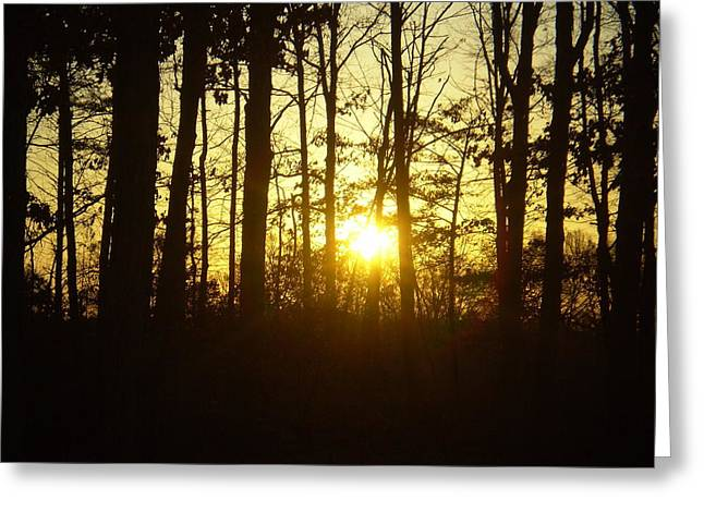 Greeting Card featuring the photograph A Walk In The Woods by Robin Coaker