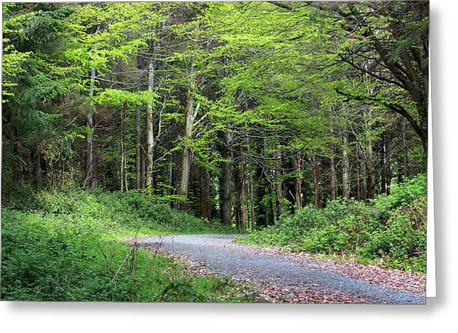 A Walk In The Woods Greeting Card by Tom  Doherty