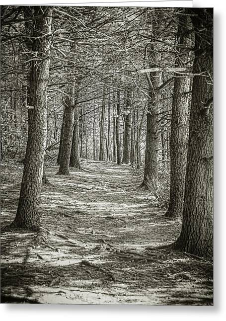 A Walk In Walden Woods Greeting Card