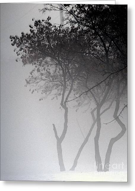 A Walk Through The Mist Greeting Card by Linda Shafer