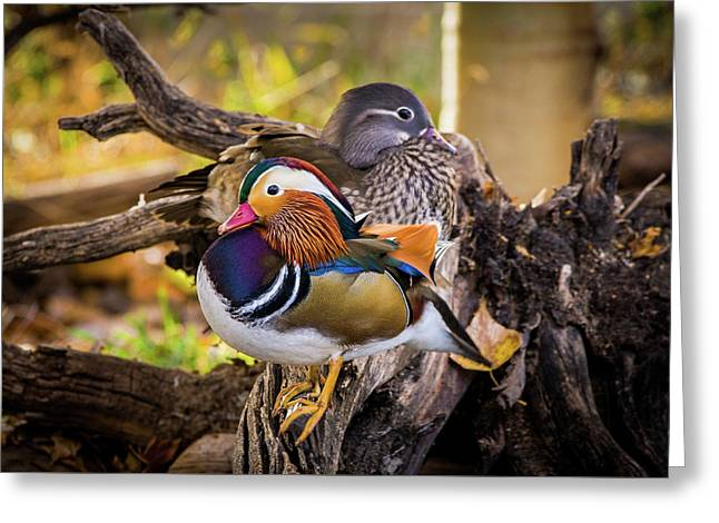 A Watchful Eye - Mandarin Ducks Greeting Card
