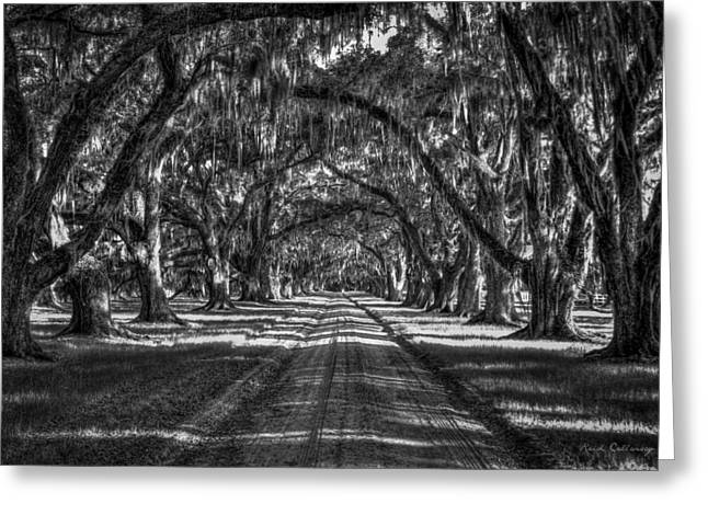The Majestic Way Live Oaks Tomalley Plantation South Carolina Greeting Card by Reid Callaway
