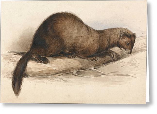 A Weasel Greeting Card