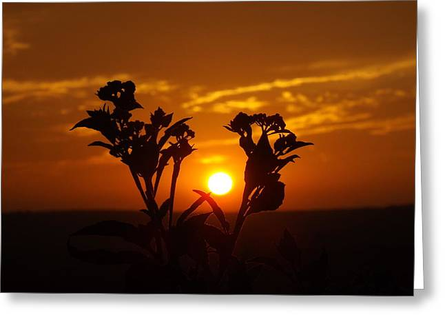 A Weed Sunset Greeting Card by Rebecca Cearley