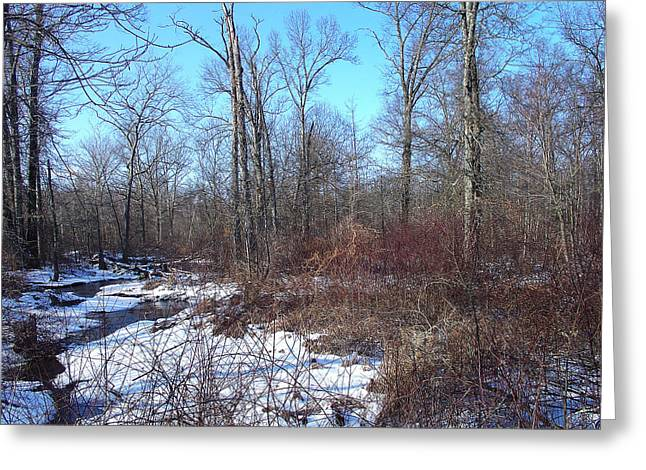 A Welcome Thaw In January Greeting Card by Terrance DePietro