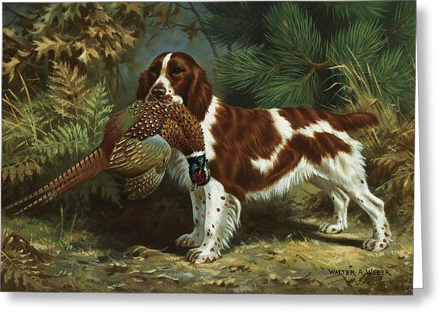 Full-length Portrait Photographs Greeting Cards - A Welsh Springer Spaniel Holds A Dead Greeting Card by Walter A. Weber