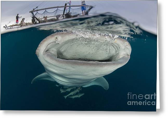A Whale Shark With Mouth Wide Open Greeting Card