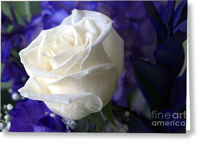 A White Rose Greeting Card by Sharon Talson