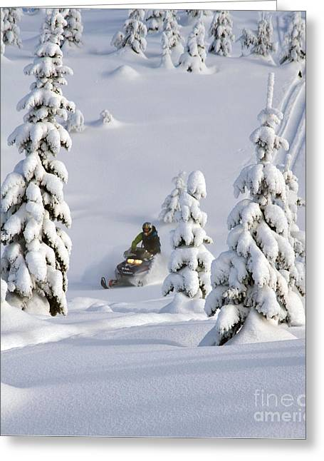 A Whole New Snowy World Greeting Card by Ryan Djakovic