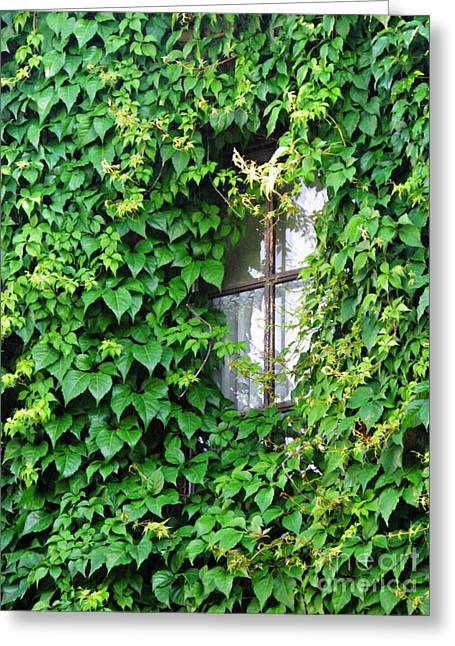 A Window In Schierstein 7 Greeting Card by Sarah Loft