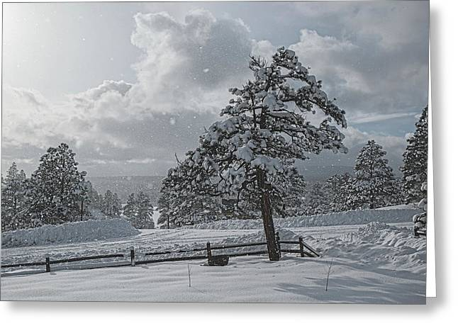 Greeting Card featuring the photograph A Winter Storm In Pagosa by Jason Coward