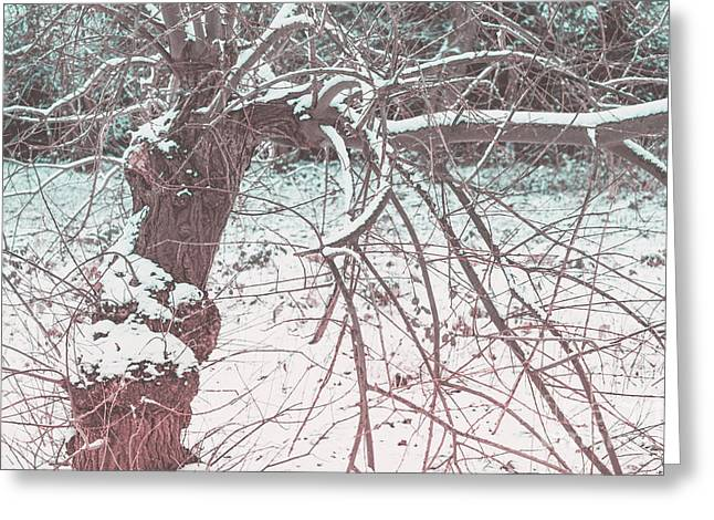 A Winter Tree Greeting Card