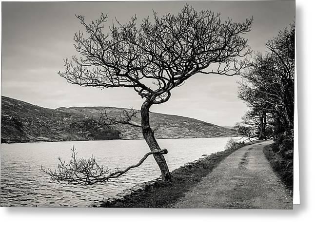 A Winter Tree Greeting Card by Martina Fagan