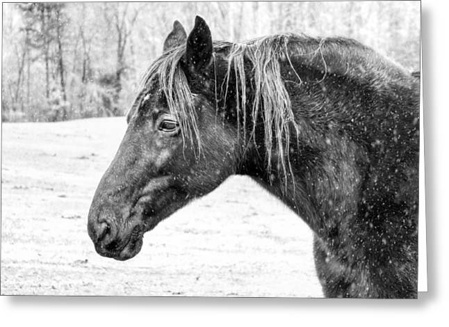 A Winter's Day, Black Horse Snow Falling Greeting Card