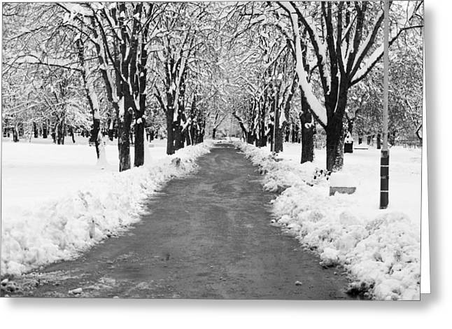 A Winter's Path Greeting Card by Rae Tucker