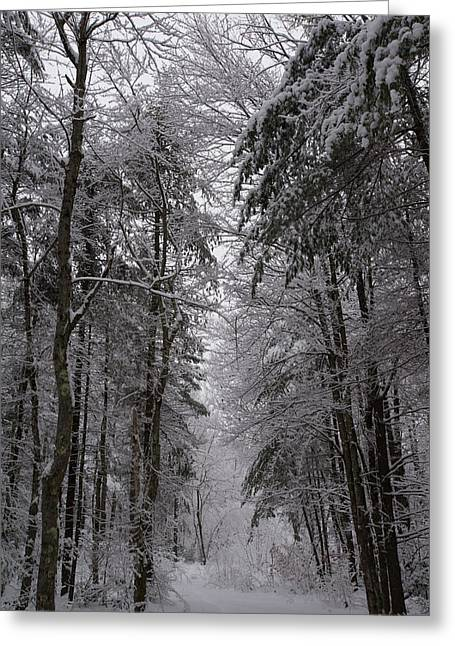A Winters Path Greeting Card