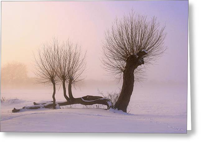 A Winters Sunset Greeting Card by James Tully
